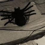 spidertheme2