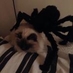 spidertheme7
